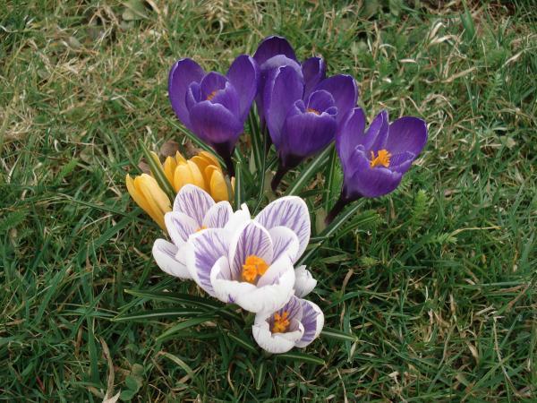 C'est le printemps!!!!
