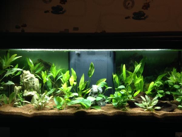 Aquarium de Cocotine